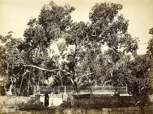 sri-maha-bodhi-tree.jpg