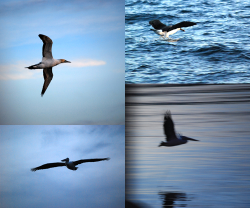 port-birds.jpg