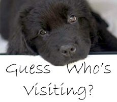 a black labrador pup looks peacefully into the camera, text below reads *Guess Who's Visiting?*