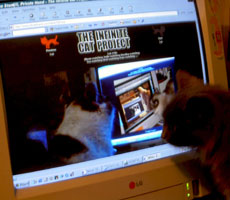 A cat looking at a computer screen showing a cat ooking at a computer screen showing a cat ooking at a computer screen showing a cat ooking at a computer screen showing a cat ooking at a computer screen etc etc ad infinitum