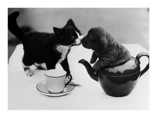 A black and white kitten on a white tablecloth next to a teacup and saucer is touching noses with a wrinkly puppy who is, for some reason, sitting inside a teapot