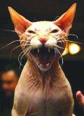 cat_mean