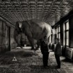 elephant-in-the-room_david-blackwell