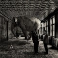 elephant-in-the-room_david-blackwell