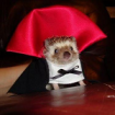dracula_hedgehog