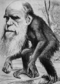 An ink drawing of a chimpanzee's body with the head of Charles Darwin
