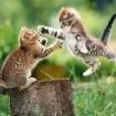 kitten catfight