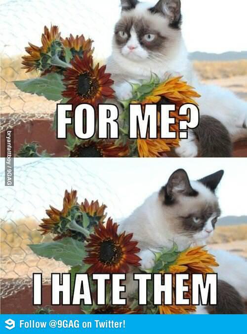 image - Grumpy Cat Valentine