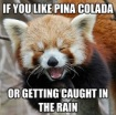 red-panda_pina-colada-song