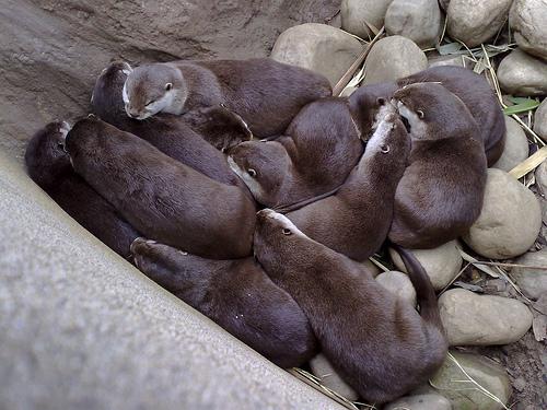 Otterpile
