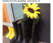 Photograph of three pairs of gumboots beside a front door, with a sunflower