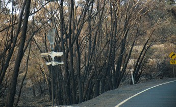 Burned trees and melted road sign by roadside